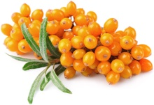 sea_buckthorn
